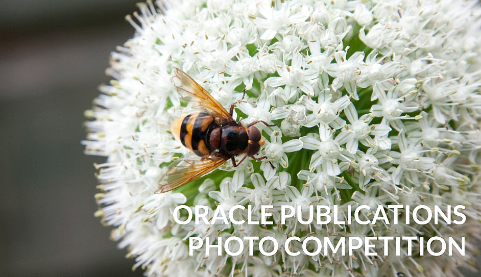 Oracle Photo Competition